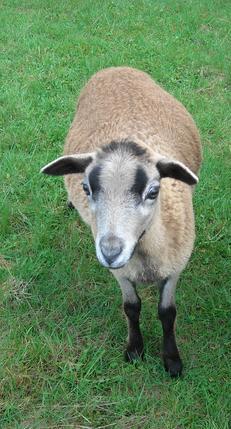 Breed History :: Bush Creek Farm